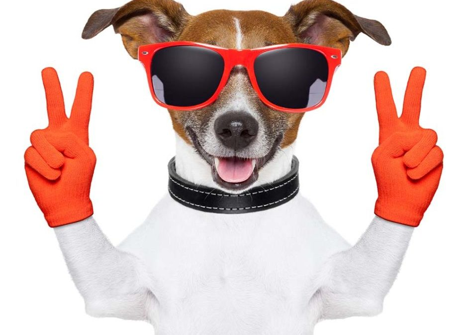 Dog holding victory fingers up. Article is about SEO, Search Engine Optimization tips